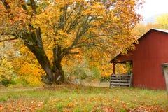 Granaio ed albero di caduta Fotografie Stock Libere da Diritti