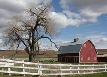 Granaio ed albero rossi Fotografia Stock Libera da Diritti