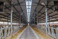 Granaio moderno per crescere delle mucche nella stalla libera del bestiame Immagini Stock Libere da Diritti