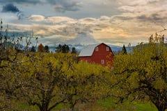 Granaio rosso al frutteto della pera in Hood River O in U.S.A. Fotografia Stock Libera da Diritti