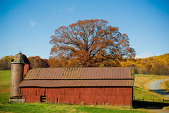 Granaio rosso con l'albero di autunno Immagini Stock Libere da Diritti
