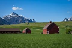 Granaio rosso nell'Oregon immagine stock