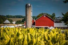 Granaio rosso vicino al campo di tabacco nella contea di Lancaster fotografie stock