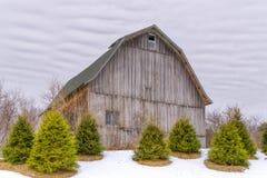 Granaio stagionato nell'inverno con la riunione del pino della priorità alta immagine stock libera da diritti