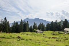 Granaio sul prato nelle alpi europee Immagine Stock Libera da Diritti