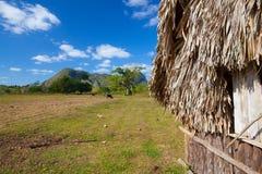 Granaio tipico sulle piantagioni del tabacco Fotografia Stock