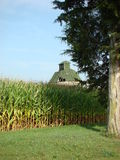 granaio in un campo di grano Fotografie Stock