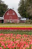 Granaio variopinto del campo e dell'agricoltore del tulipano Fotografia Stock Libera da Diritti