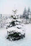 Granar - christmastree Fotografering för Bildbyråer