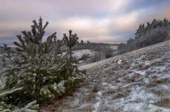 Granar efter snowen Arkivbild