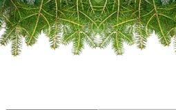 Granar för Xmas-chrismasbakgrund royaltyfri foto