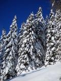 Granar i snön Arkivbilder