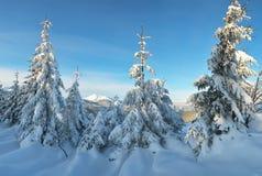 Granar i snön Fotografering för Bildbyråer