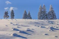 Granar i vinter arkivbilder
