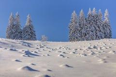 Granar i vinter royaltyfria foton