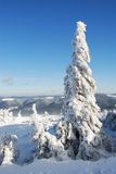 granar snow under vinter Royaltyfri Bild