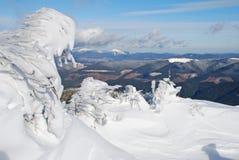 granar snow under vinter Royaltyfria Foton