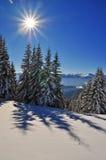 granar snow under vinter Royaltyfria Bilder