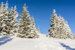 Granar som täckas med snö, och en bana som dem emellan beträdas av vandringturister Royaltyfria Foton
