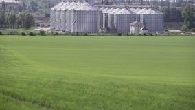 Granaries near the green field in spring stock video