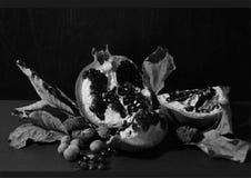 Granatäpple Fotografering för Bildbyråer