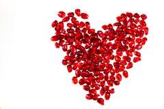 Granatäpplefrö i ett saftigt rött skal på en vit bakgrund royaltyfri foto