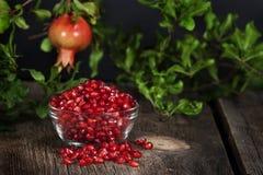 Granatäpplefrö som hänger hel frukt arkivfoto