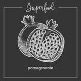 Granatäpplesnittet i halv monokrom superfoodsepia skissar stock illustrationer