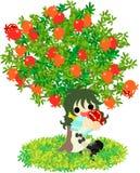 Granatäppleträd Arkivbild