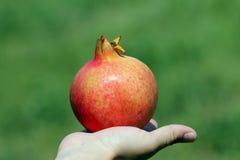 Granatapfel Lizenzfreie Stockfotos