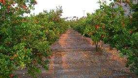Granatapfel-Bearbeitung Lizenzfreie Stockbilder