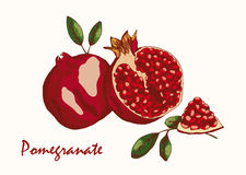 Granatapfel, Farbvektorillustration Stockbilder