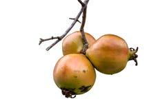 Granatapfel lokalisiert auf weißem Hintergrund Lizenzfreies Stockfoto