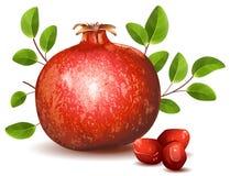 Granatapfel mit Blättern Lizenzfreie Stockbilder