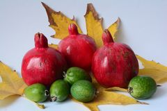 Granatapfel u. feijoa Stockbild