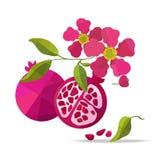 Granatapfel- und Blumenvektorgegenstände Stockbild