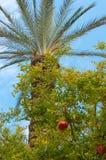 Granatapfel- und Palme Lizenzfreies Stockbild