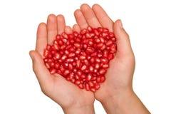 Granatapfelfrüchte Stockfotos