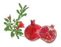 Granatapfelfrucht und -blume lokalisiert auf Weiß lizenzfreies stockbild
