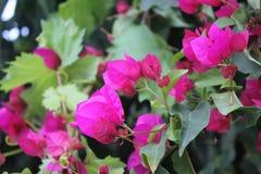 Granatowów kwiaty zdjęcia stock