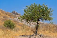 Granatowa drzewo obraz royalty free