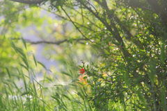 Granatowa kwiat na luksusowym zielonym tle Fotografia Stock