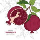 Granatowa projekta owocowy szablon Botaniczna owoc Ręka rysujący owoc styl ilustracja ilustracja wektor