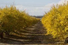 Granatowa sad w spadku Zdjęcia Stock