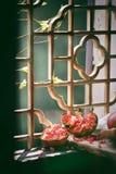 Granatowiec Zdjęcie Stock