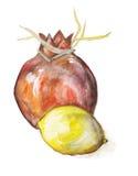 Granatowiec i cytryny owoc ilustracja wektor