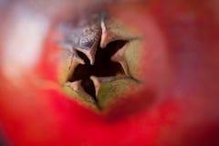 Granatowiec korona obraz stock