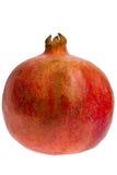 Granatowiec na biel Obrazy Royalty Free