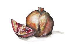 Granatowiec owoc ilustracji