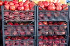 Granatowiec owoc tło cytrusa cytrusów świeży grupowy pomarańczowy tangerine biel Rynek w Istanbuł Fotografia Stock